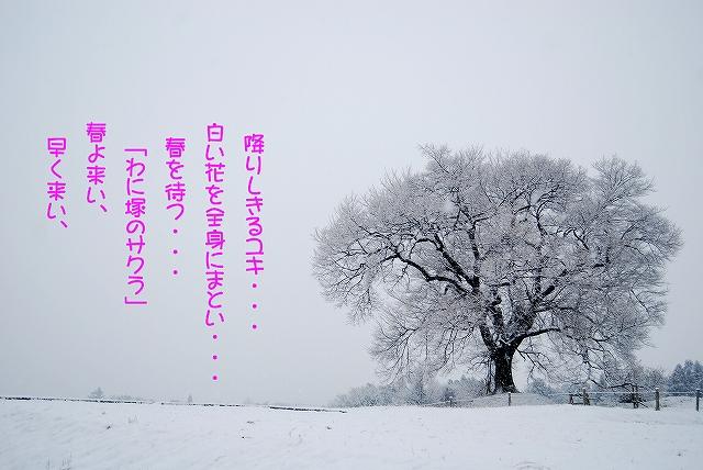 Sdsc_0432b